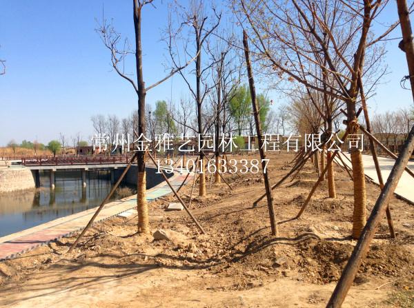 公园绿化种植