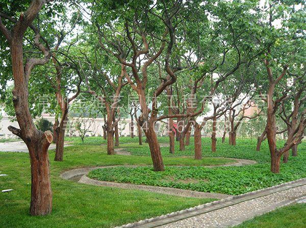园林景观绿化 (23)